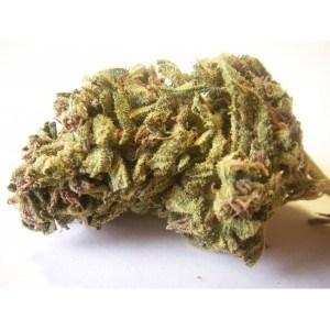 Order Jack Herer Medical Marijuana Strain