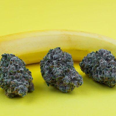 Chiquita Banana Strain